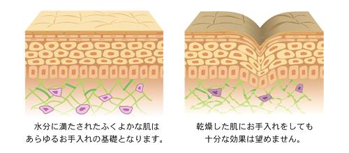 水分に満たされたふくよかな肌は あらゆるお手入れの基礎となります。乾燥した肌にお手入れをしても 十分な効果は望めません。