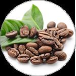 コーヒー種子エキス