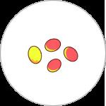 デュナリエラ(β-カロチン)