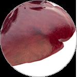 肝臓酵素分解物